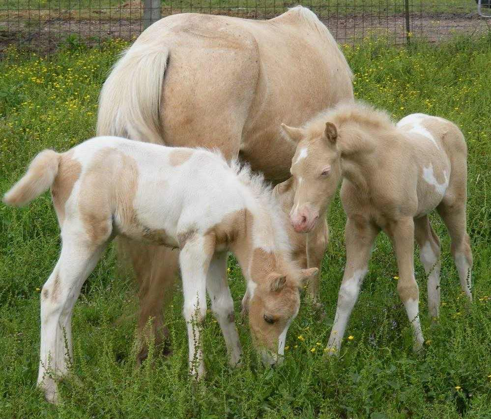 cute baby horses that make us squee